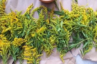 Herbal Medicine For Spring Allergies