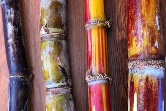 Endangered Eating: Hawai'in Sugar Cane