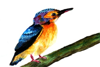 Bird Painting for the Watercolorist
