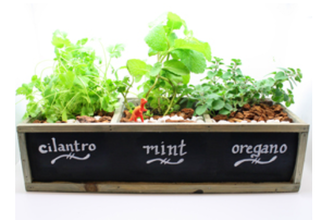 Herb Garden in Chalkboard Planter