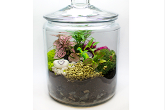 Tropical Terrarium in Apothecary Jar