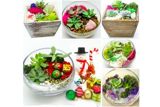 Pick a Succulent Garden Box or Glass Terrarium Design