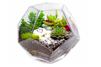 Succulents in Geometric Prism Glass Terrarium