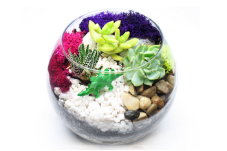 Succulent Terrarium in Rose Bowl