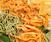 Handmade Pasta (Couples / BYOB)