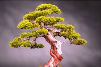 Gardening Workshop: Bonsai Trees