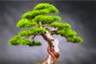 Make a Bonsai Tree