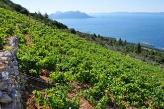 Wines of Croatia & Hungary