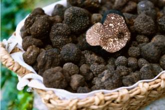 Truffles Go Seasonal