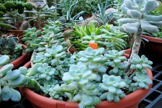 Intro to Houseplants and Succulents