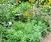 Native Perennials for the Late Season Garden