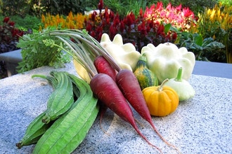Introduction to Organic Vegetable Gardening