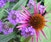 Plant Medicine for Fall Transitions