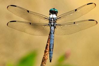 Biomimicry: Exploring Nature's Intelligence & Elegance