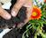 Soil Basics 101