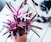 Houseplants 101: How Not to Kill Your Houseplant