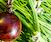 Botanical Jewelry: Drift Seed Jewelry Making