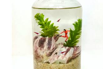 Miniature Aquascapes