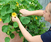 Container Gardening on Rooftops, Terraces and Balconies