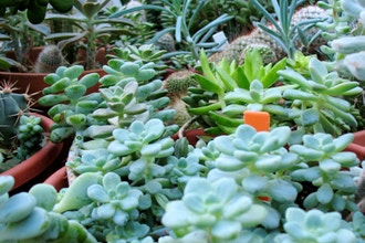 DIY Fertilizers and Soil for House Plants - On-Site