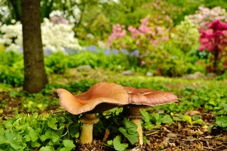 Mushroom-Hunting Basics