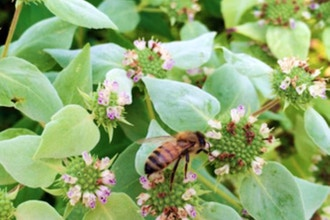 Competitive Native Plants for Weedy Landscapes