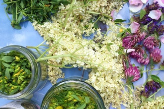 Summer Wellness with Herbal Medicine